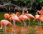 Groepsreis kleurrijk Cuba