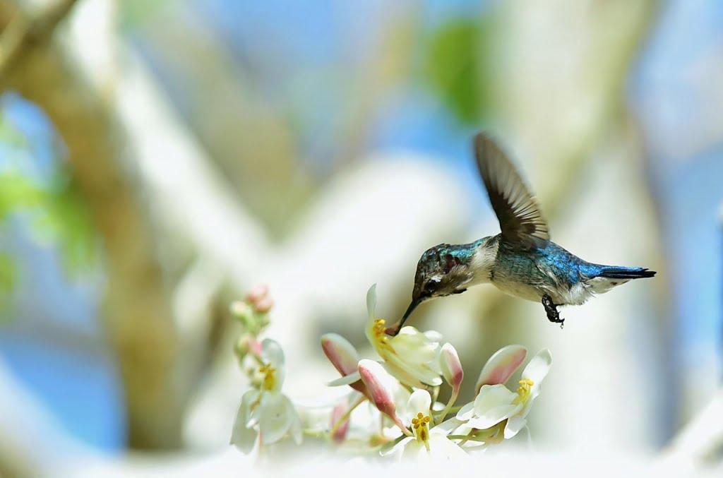 Natuur in Cuba